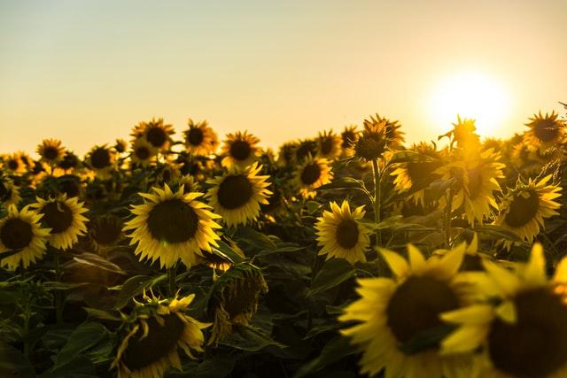 В Україні обіцяють потепління майже до 30 градусів