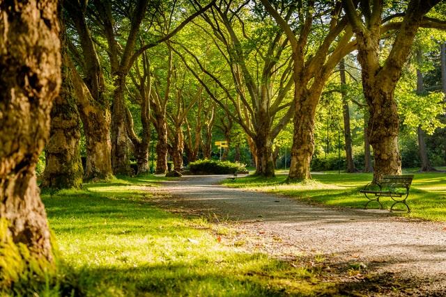 Як працюватимуть парки після послаблення карантину