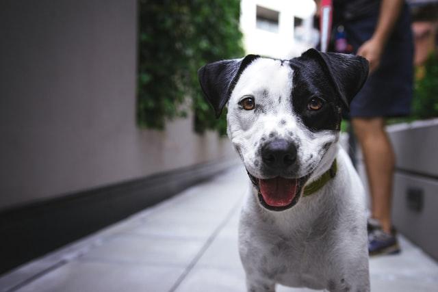 У Львові за допомогою мобільного додатку порахують усіх безпритульних собак