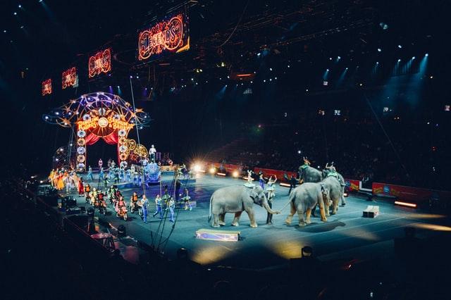 Депутати ЛМР підтримали петицію про заборону цирків з тваринами у Львові
