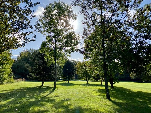 Міський парк Золочева «Здоров'я» буде пам'яткою садово-паркового мистецтва