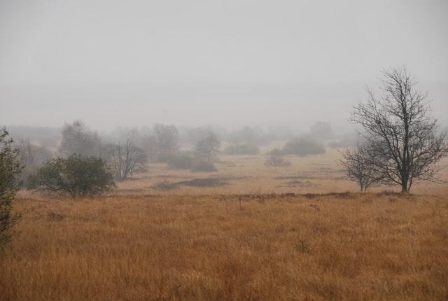 Синоптики попередили про туман на заході України