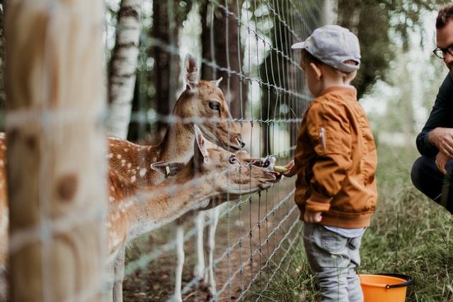 В Україні можуть заборонити використання тварин у цирку та контактні зоопарки